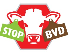 BVD stop